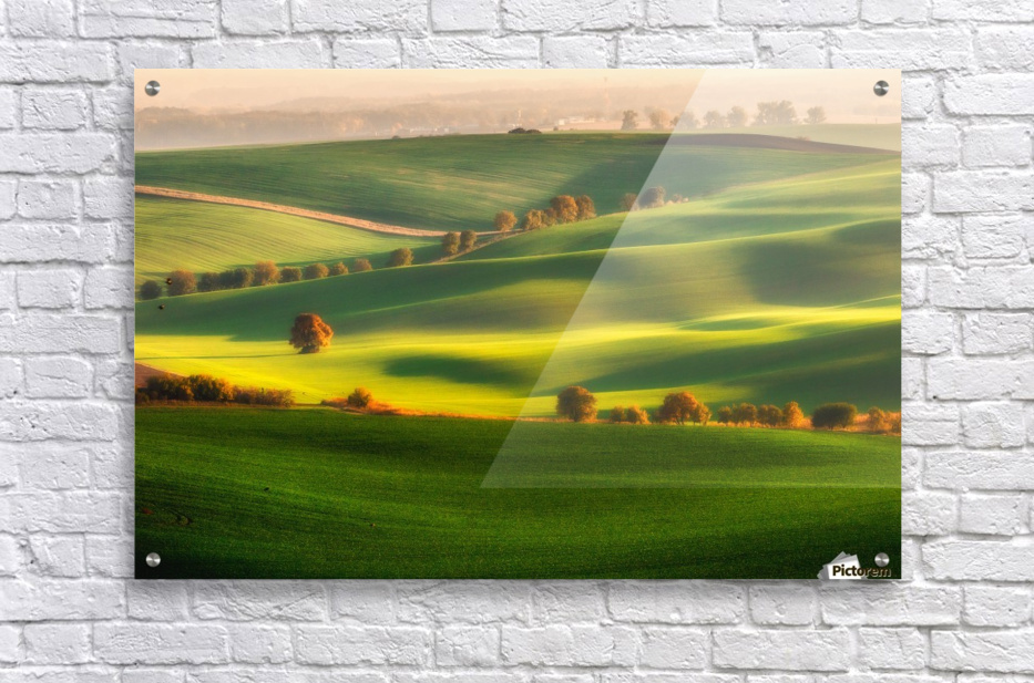 Green fields  Acrylic Print