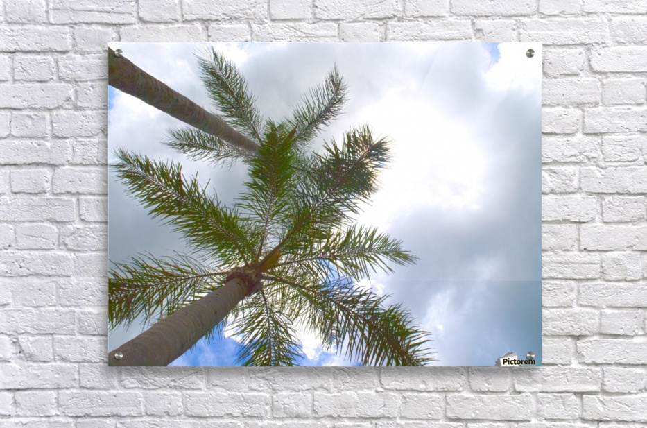 HDR Palm trees looking up against a cloudy sky  Acrylic Print
