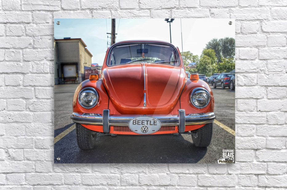 Orange Beetle  Acrylic Print
