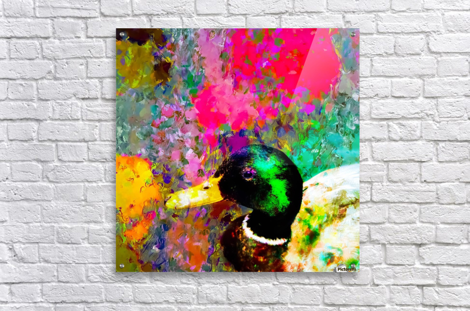 mallard duck with pink green brown purple yellow painting abstract background  Acrylic Print
