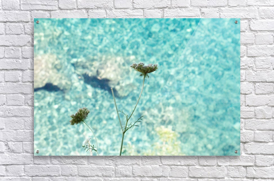 Flowers on the sea  Acrylic Print