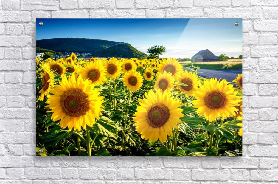 Sunflower Under The Hainburg Castle Zoltanduray Canvas