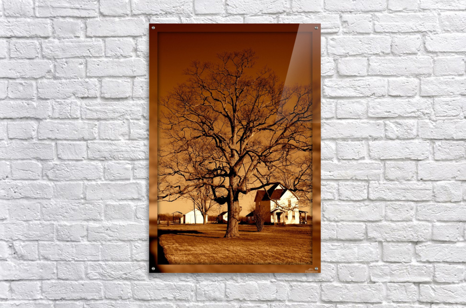 Magnificent Tree  Acrylic Print