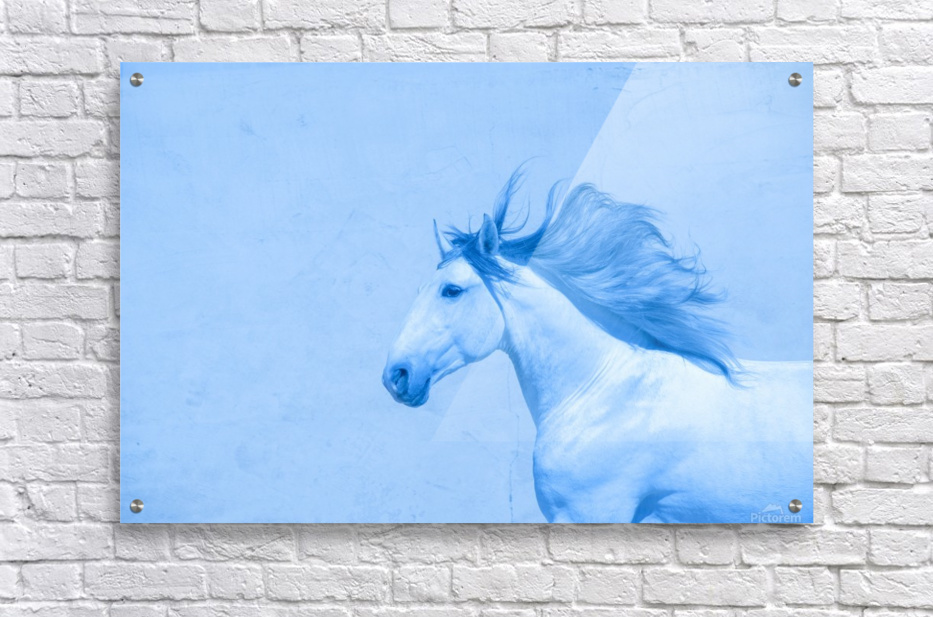 Blue Andalusian Horse 2  Acrylic Print
