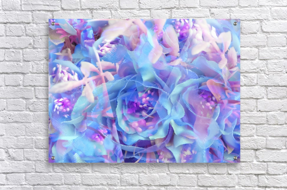 blooming blue rose texture abstract background  Acrylic Print