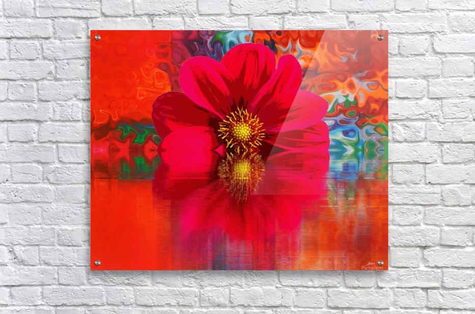 Beautiful colourful flower blossom flower background design floral home decor decoration   Acrylic Print