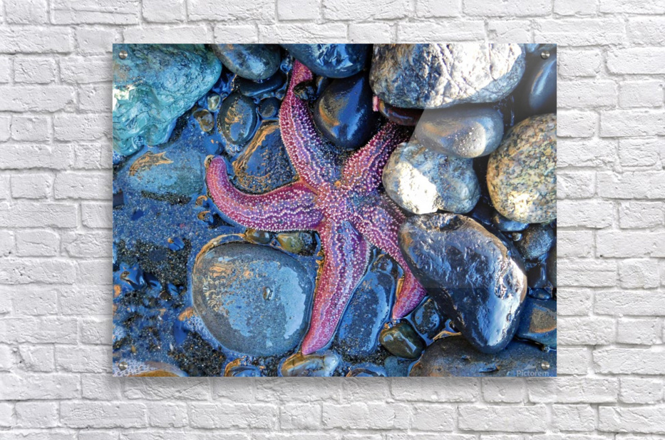 Low Tide Starfish  Acrylic Print