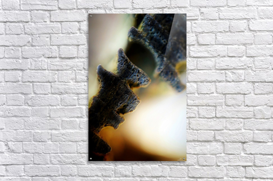 Abstract Macro Nature Photography 111  Acrylic Print