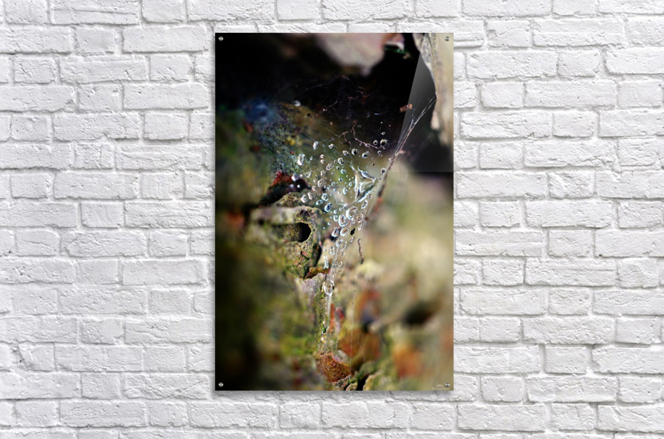 Macro Raindrop Photography Art 44  Acrylic Print