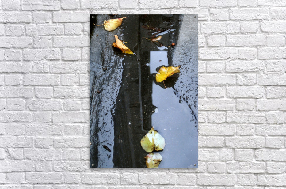 Floating Autumn Leaves  Acrylic Print
