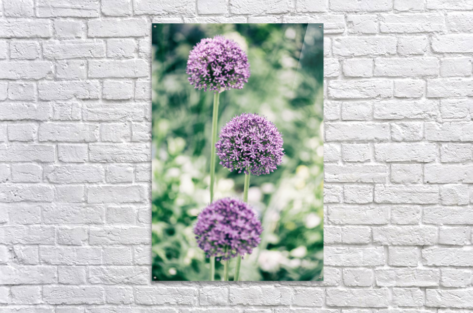 Three Purple Flowers  Acrylic Print