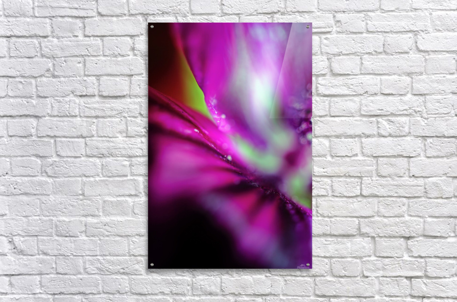 Abstract Pop Color Flower Photography 05  Acrylic Print