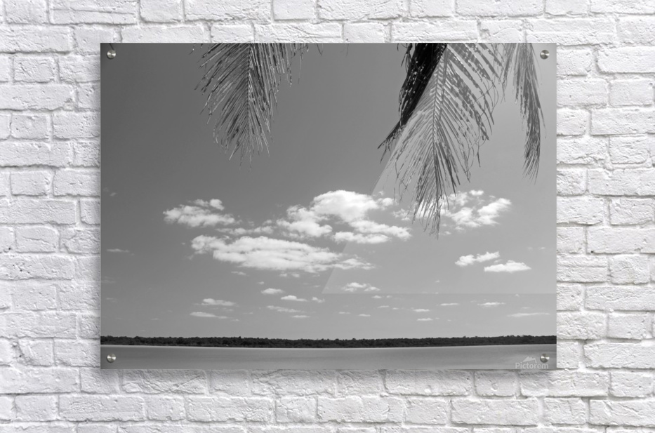 Peeking Palm Tree B&W  Acrylic Print