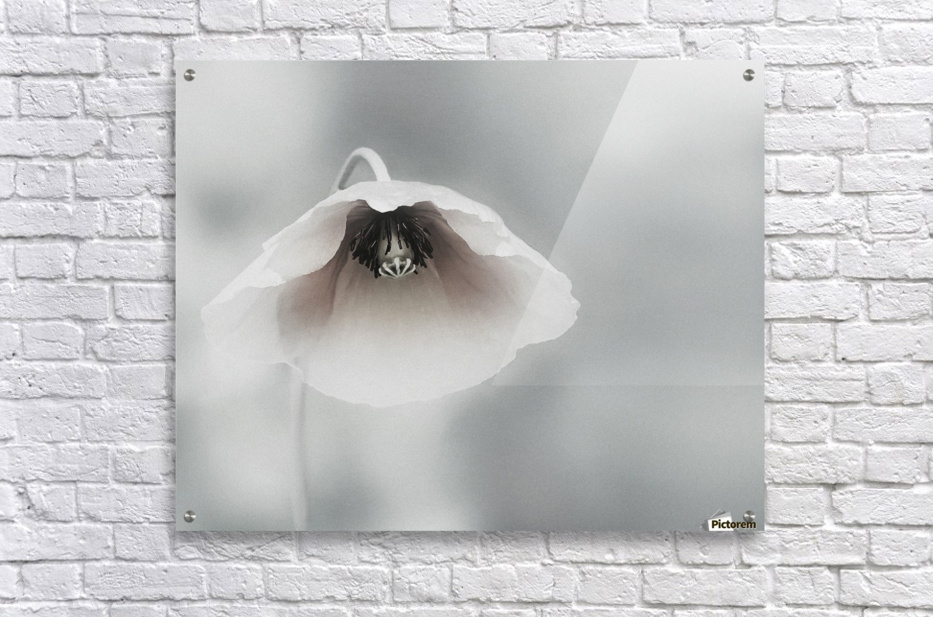 Ephemeral Beauty  Acrylic Print