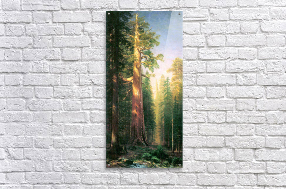 The big trees, Mariposa Grove, California by Bierstadt  Acrylic Print