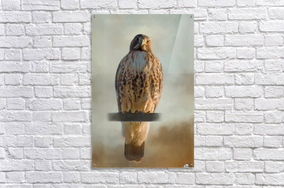 View Life - Hawk Art by Jordan Blackstone  Acrylic Print