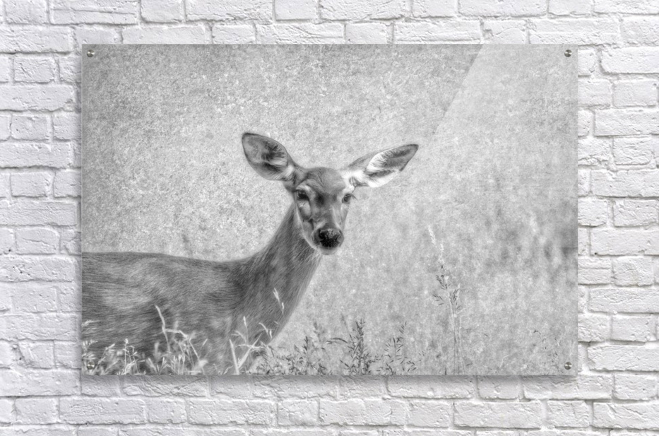 Pretty Doe  Acrylic Print