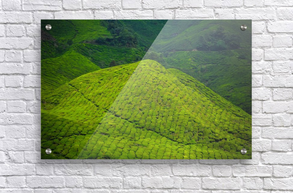 Tea plantations  Acrylic Print