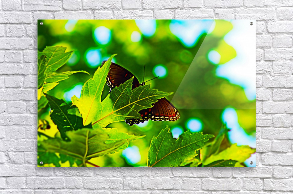 Resting on A Maple Leaf  Acrylic Print