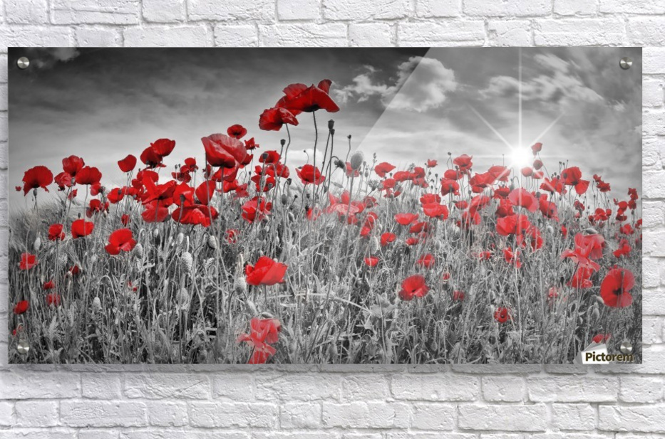 Idyllic Field of Poppies with Sun  Acrylic Print
