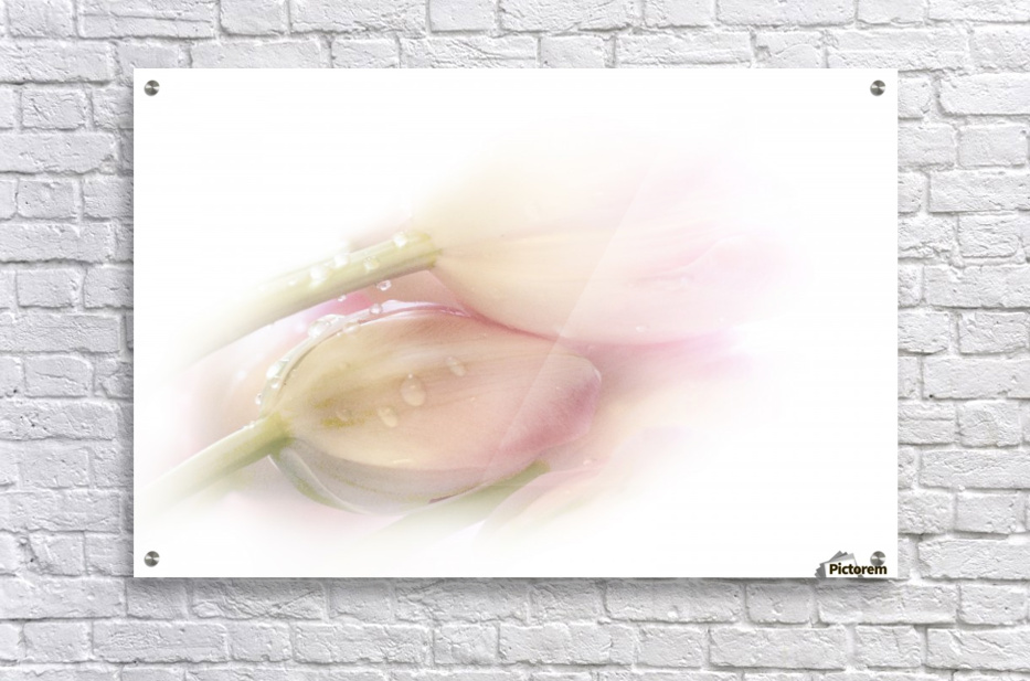 Touching  Acrylic Print