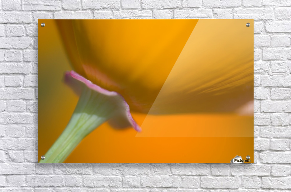Close Up Of Poppy  Acrylic Print
