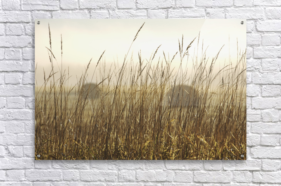 Bales Of Hay In A Field In The Fog; Thunder Bay, Ontario, Canada  Acrylic Print