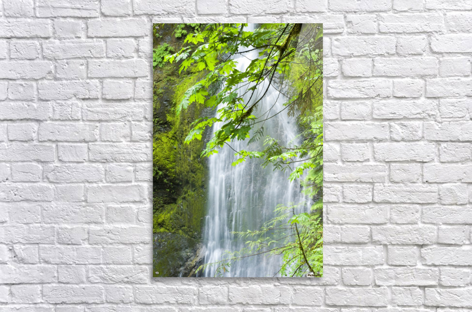 Marymere Falls, Olympic National Park  Acrylic Print