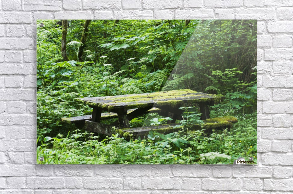 An Abandoned Picnic Table Is Reclaimed By The Forest Elsie Oregon - Picnic table print