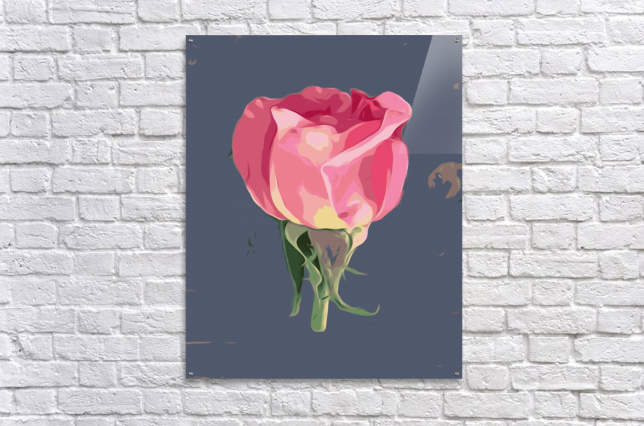 pink rose with grey background  Acrylic Print