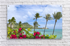 Hawaii, Oahu, Diamond Head, Waikiki, Palm Trees And Bougainvillea Foreground.  Acrylic Print