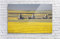Three Old Wooden Grain Elevators At Sunrise With Flowering Canola Fields In The Foreground And Background; Mosleigh, Alberta, Canada  Acrylic Print