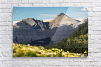 Mountain range with wildflowers on hillside in the foreground and blue sky; Bragg Creek, Alberta, Canada  Acrylic Print