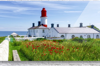 Souter Lighthouse with a field of red poppies in the foreground; South Shields, Tyne and Wear, England  Acrylic Print