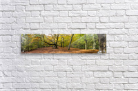 Panorama of a forest in autumn colours; Surrey, England  Acrylic Print