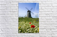 A windmill against a blue sky and cloud with a field of wildflowers in the foreground; Whitburn, Tyne and Wear, England  Acrylic Print