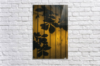 Shadows of tree branches and leaves cast on a wooden fence; Gateshead, Tyne and Wear, England  Acrylic Print