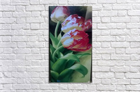 Red Love Flowers  Acrylic Print