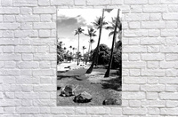 palm tree with cloudy sky in black and white  Acrylic Print