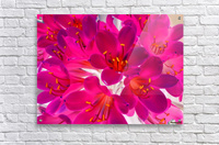 closeup pink flower texture abstract background with orange pollen  Acrylic Print