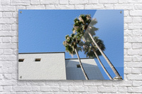 3 Palm Trees Next to Building  Acrylic Print
