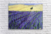 Purple Lavender fields painting  Acrylic Print