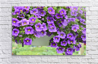 Beautiful Purple Flowers Photograph  Acrylic Print