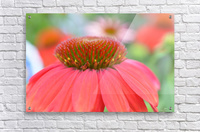 Orange Flower Photograph  Acrylic Print