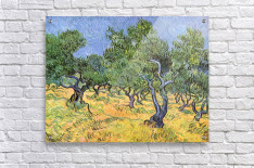 Olive Trees by Van Gogh  Acrylic Print