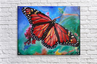 Colorado Butterfly  Acrylic Print