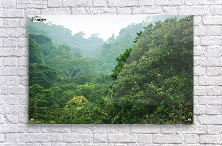 Rainforest Canopy  Acrylic Print