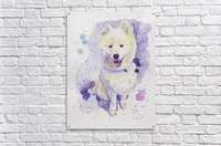 Samoyed Dog - Portrait of Juno  Acrylic Print