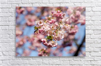 Cherry blossom Red  Acrylic Print