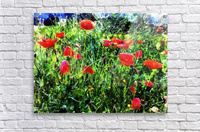 Green Pasture With Red Poppies  Acrylic Print